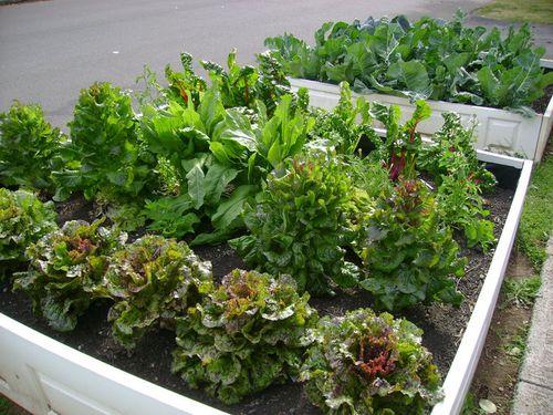 Salad.2.